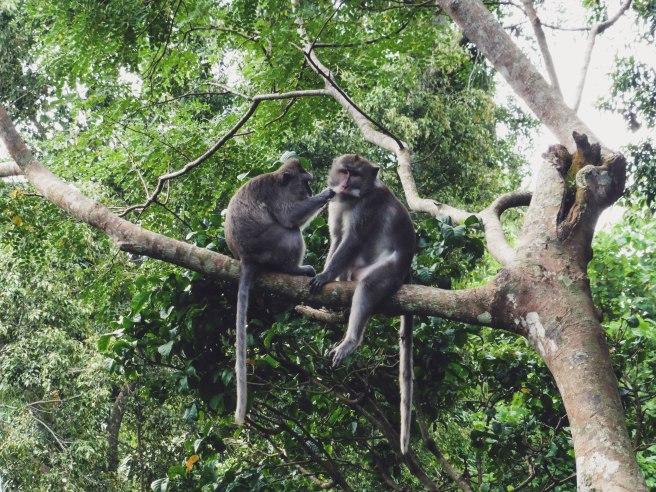 monkey forestP1000809